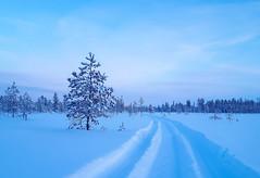 Track in snow (samulihokkanen) Tags: winter snow tracks lapland snowmobile bluemoment