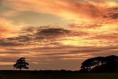 Taking The Time To Look (garethleethomas) Tags: sky tree wales pembrokeshire landscape glow clouds sunset