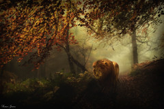The Lone Hunter (Karen James) Tags: lion woodland woods trees autumn autumncolour mist sunrays composite kj