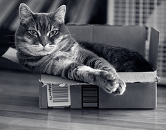 Beauty in the Box (PhotoAtelier) Tags: box catinbox bw monochrome