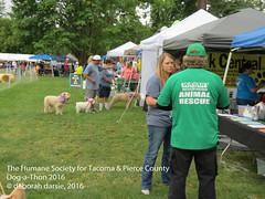 DAT2016_Crowd_1058 (greytoes_99) Tags: agility dat2015 dat2016 event humanesocietytacoma people summer tacoma tacomahs volunteers dog humananimalbond cat lakewood wa us