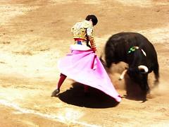 Abel Robles (aficion2012) Tags: ceret 2016 novillada corrida toros bulls bull fight novillos france francia d mario y hros de manuel vinhas abel robles capa capote capear capeando