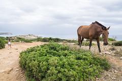 Menorca-16071458 (Lee Live: Photographer) Tags: beach ciutadella crazygolf holiday leelive mahon ourdreamphotography sonbou sunset