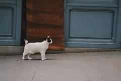 270616 (kleoskleos) Tags: cat gato madrid ciudad city street animal