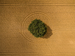 Encompassed II (Draws_With_Light) Tags: agriculture aerialphotography scene drone landscape tree djiphantom3advanced vegetation season fields summer camera northyorkshire wheatfields places colton england unitedkingdom gb