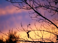 Sunset 20160830 (caligula1995) Tags: 2016 balconygarden clouds plumtree sunset tumblr