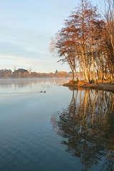 sunrise over lake roto kohatu (colinhansen1967) Tags: lakes water sunrise trees nikon d3200 misty ducks