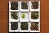 How well do you know your teas? (Obubu Tea Farms) Tags: greentea japanese japanesetea looseleaf obubu obubutea tea wazuka
