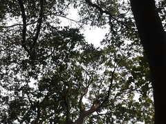 Naturaleza (nevamoon) Tags: nature simply nofilter natural air