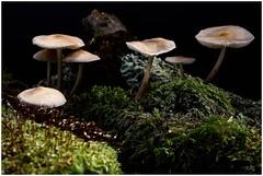 CHAMPIGNON (valerinette2012) Tags: champignon d800 poselongue borderfx 60nikonmacro