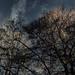Baumkronen im Licht