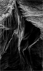 E se restasse un ricordo del respiro, dal profondo della terra fiorir (ro.besana) Tags: alps alpen alpi