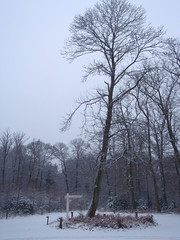 hanging on (Jensje) Tags: schnee snow tree sneeuw nederland thenetherlands boom wegwijzer woudenberg