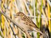 GilbertRP-Jan2015-1-9 (birdistheword1980) Tags: bird nikon birding gilbert lightroom nikoncoolpix 2015 herping birdnerd riparianpreserve wintermigration gilbertwaterpark adecadebetween
