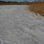 Snow-covered marsh thumbnail