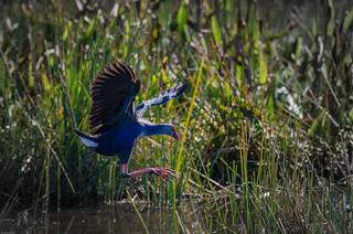 20150215_Wakodahatchee Wetlands_79664.jpg