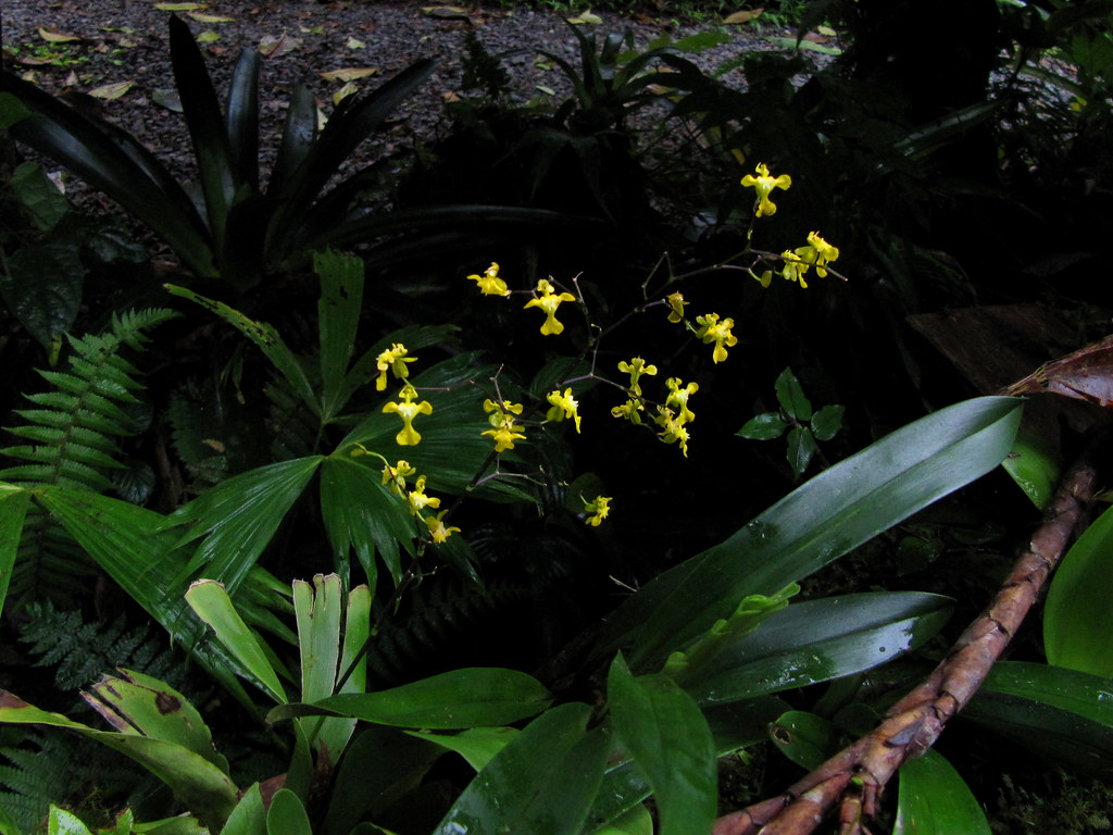 the monteverde rain forest: a world amongst the clouds essay Monteverdes two cloud forest reserves provide visitors with a wealth of  opportunity to explore,  forests — whose spanish name is bosque nuboso —  cover some 1% of global woodlands  you can choose between a day or a night  tour.