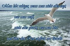 Lebensweisheit (2021x anges.) (Carl-Ernst Stahnke) Tags: usa strand florida quotes möwe lebensweisheit wellen atlantik proverbs spruch ozean sprüche salzwasser