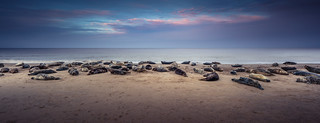 Horsey Seals 01/03/15