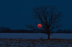 Moonrise (ramseybuckeye) Tags: life road county ohio moon tree art field pentax full rise bowsher auglaize