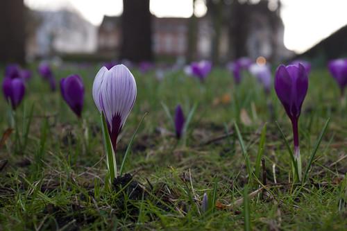 Spring time ©  Still ePsiLoN