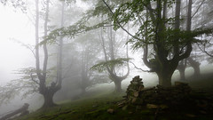 THE BOOT (Jesus Bravo) Tags: misty fog forest mood country foggy basque beech gorbea gorbeia euskai