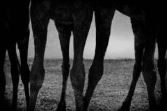 011 (StefanoMassai) Tags: travel desert morocco tribes marocco viaggio nomads deserto tuareg nomadic trib nomadi