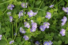 Blumen Wiese 1 (sb.estate) Tags: flowers blue sun white soft wiese blumen ligt yelow sunn sumer blosom purpel collor jelow