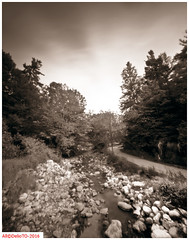 The lonely jogger (DelioTO) Tags: summer ontario canada june rural landscape blackwhite woods trails pinhole 4x5 toned f250 natparks autaut aph09 panx64