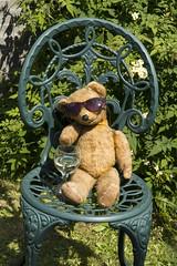 Chillin' (gail_heaton) Tags: chillin sunshine teddybear