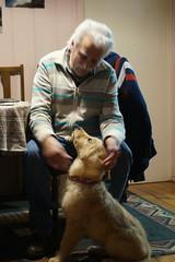 KONA (CERROELOL) Tags: golden mascotas retrieve perritas