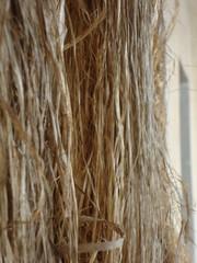 hemp wire (ba.sa74) Tags: canapa filo filato tessitura filanda storia biellese museo mezzana moda natura sostenibilita ambiente