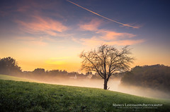 Fog is coming (.Markus Landsmann) Tags: landschaft landscape sunset sonnenuntergang nature natur germany deutschland baum tree feld field sky himmel fog nebel markuslandsmann markuslandsmannphotography sirui pentax k5 sigma leverkusen