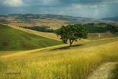 Val D'Orcia (Giancarlo Giupponi  Trentino) Tags: travel tuscany pienza valdorcia grano squirico terrapille giupponi ggmediacreations