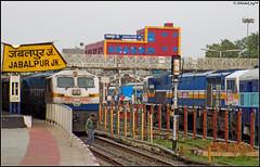 Gigantic Jabalpur Junction (Abhishek Jog) Tags: was with junction rake massive rest passenger taking gigantic mighty et rath crowded rewa jn shunting greets jabalpur garib jbp 12188 itarsi 40062 cstm 51701 40168 wdp4b wdp4d cstmjbp jbprewa cstmjabalpur
