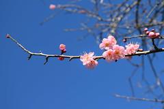 Blossom (Heart felt) Tags: winter light newzealand children masterton earlyspring wairarapa springiscoming henleylake