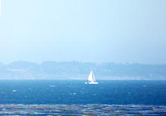 P1030378-In the foggy ocean (nokhum.markushevich) Tags: ocean sea seascape nature fog sailboat pacific pointlobos
