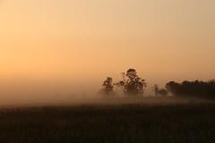Leash Fen Mists (Derbyshire Harrier) Tags: peakdistrict peakpark derbyshire dawn moorland morning summer 2016 leashfen mist sunrise easternmoors rspb nationaltrust silverbirch glow willow trees ngc