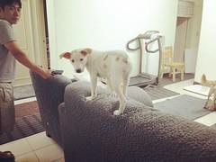 @  #dog #doglove #doglover #dogslife #dogs #dogsofinstagram #instadog #dogstagram #dogoftheday #ilovemydog #doglovers #rescuedog #mydog #bestdogever #puppy #puppylove #puppiesofinstagram #p (angelsmileoo) Tags: instagramapp square squareformat iphoneography uploaded:by=instagram rise