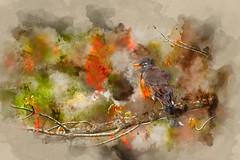 Robin (ROPhoto77) Tags: bird robin tree free backyard painterly photograph digitalmanipulation colorful