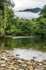 _NGE7823.jpg (Nico_GE) Tags: selvahumedatropical colombia sancipriano pacifico comunidadesafro valledelcauca co
