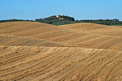 """The summer"" in the changing colors of Siena countryside (pigianca) Tags: italy castelnuovoberardenga montegiachi sanpiero cretesenesi landscape nature fujixt1 elmarc90mmf4 ngc"