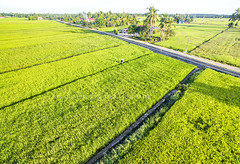 aerial view paddy field (sydeen) Tags: agribusiness agriculture business chemical commercial engine equipment farm farmer field green hat insecticide machinery opening paddy people plant pollutant pollute protective rice space spot spray summer tank toxic walk water worker aerial grass growth grow morning