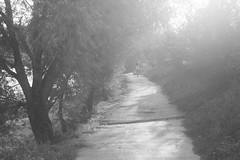 (kuuan) Tags: olympusfzuikoautotf285mm manualfocus mf olympus zuiko fzuiko 85mm f2 f285mm bw austria ybbs amstetten flare lensflare contrejour sunset