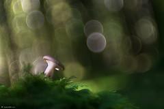 Puits de lumire (Laurette.C) Tags: bokeh lumire champignon zeissikonvariotalon nikon d610 fort objectifdeprojecteur