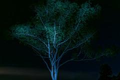 BC2_3672_DxO 1920 (brc.photography) Tags: bundaberg qld australia aus night d750 nikon