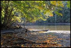 Huron River (Rantes) Tags: forestpark annarbor michigan huronriver nature autumn fall river water landscape trees foliage shore