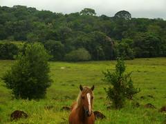 DSCN0367 (AndreAguilarP) Tags: horse nature