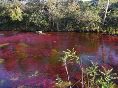 DSCN0551 (AndreAguilarP) Tags: water river nature algas colombia caocristales