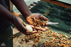 UG1605_232 (Heifer International) Tags: uganda ug